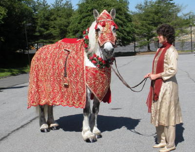 Decorated Baraat horse