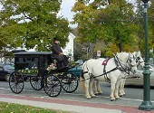 Two white horses on Hearse